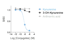 Validation of anti-L-Kynurenine antibody