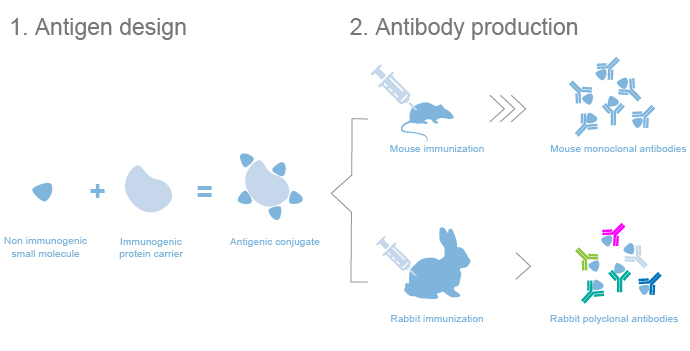 custom small molecule antibody services